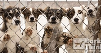 barkthink, local humane society pet shelters, hsus humane society of united states scam, informed good pet owners, dog care donations, pet care advice, dog owner tips, pitbull information, how to train a dog to fetch, minneapolis dog care, minnesota dog information, dog advocacy
