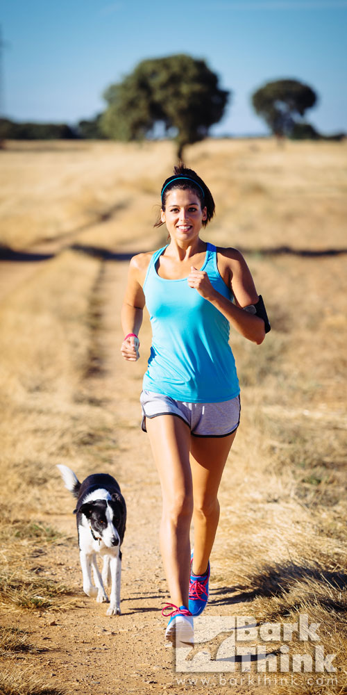 exercises for dog type, running with dogs, jogging with dogs, dog walking, how to walk your dog, dog intelligence, exercises to tire your dog, how to exercise your dog, dog games
