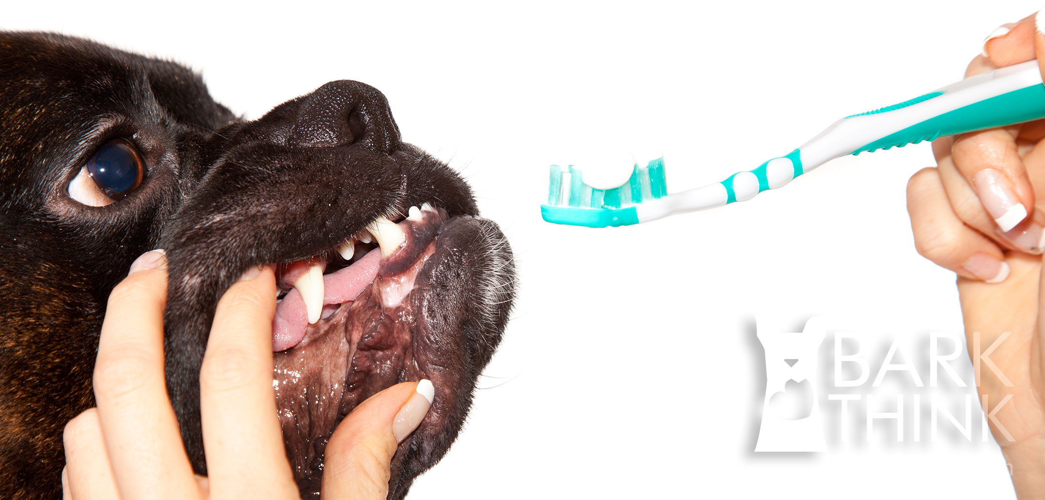 Best Dental Care Food For Dogs