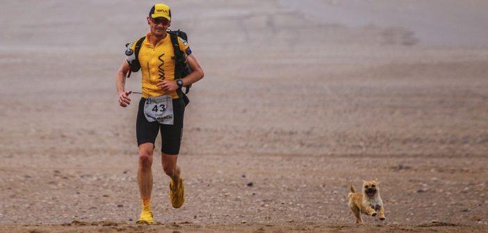 Stray Dog joins Marathoner on 155-mile race throughout Gobi Desert, China